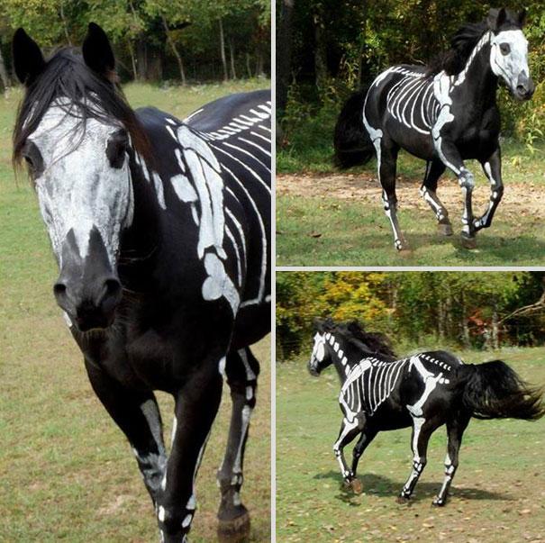 cabalo-esqueleto