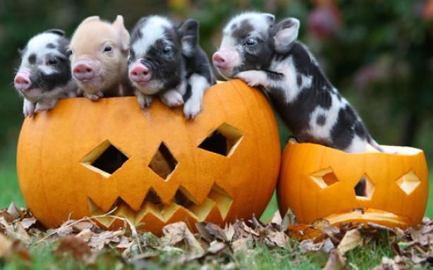 ceridots-halloween