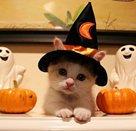gatito-bruja