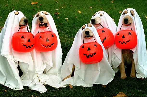 perros-fantasmas
