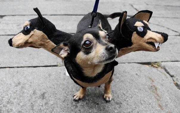 perros-tres-cabezas