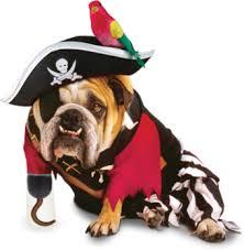 piratabuldog