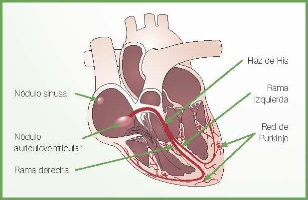 at64_cardiovet